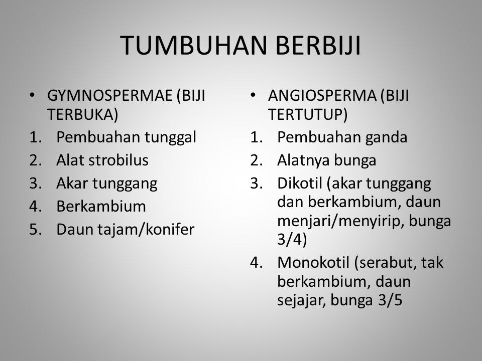 TUMBUHAN BERBIJI GYMNOSPERMAE (BIJI TERBUKA) 1.Pembuahan tunggal 2.Alat strobilus 3.Akar tunggang 4.Berkambium 5.Daun tajam/konifer ANGIOSPERMA (BIJI