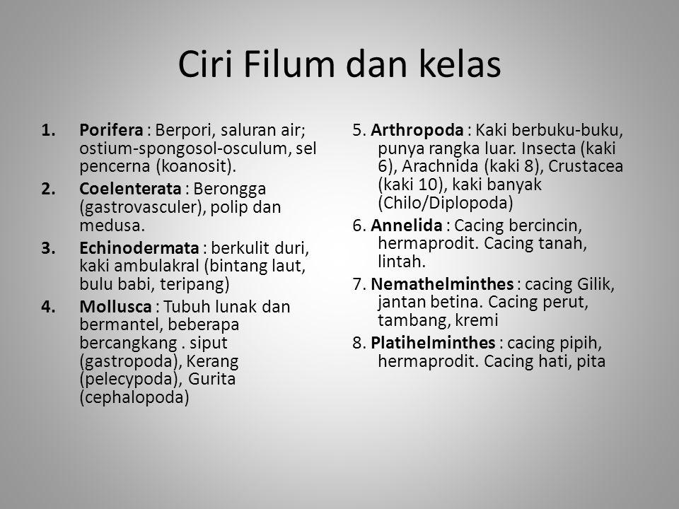 Ciri Filum dan kelas 1.Porifera : Berpori, saluran air; ostium-spongosol-osculum, sel pencerna (koanosit). 2.Coelenterata : Berongga (gastrovasculer),