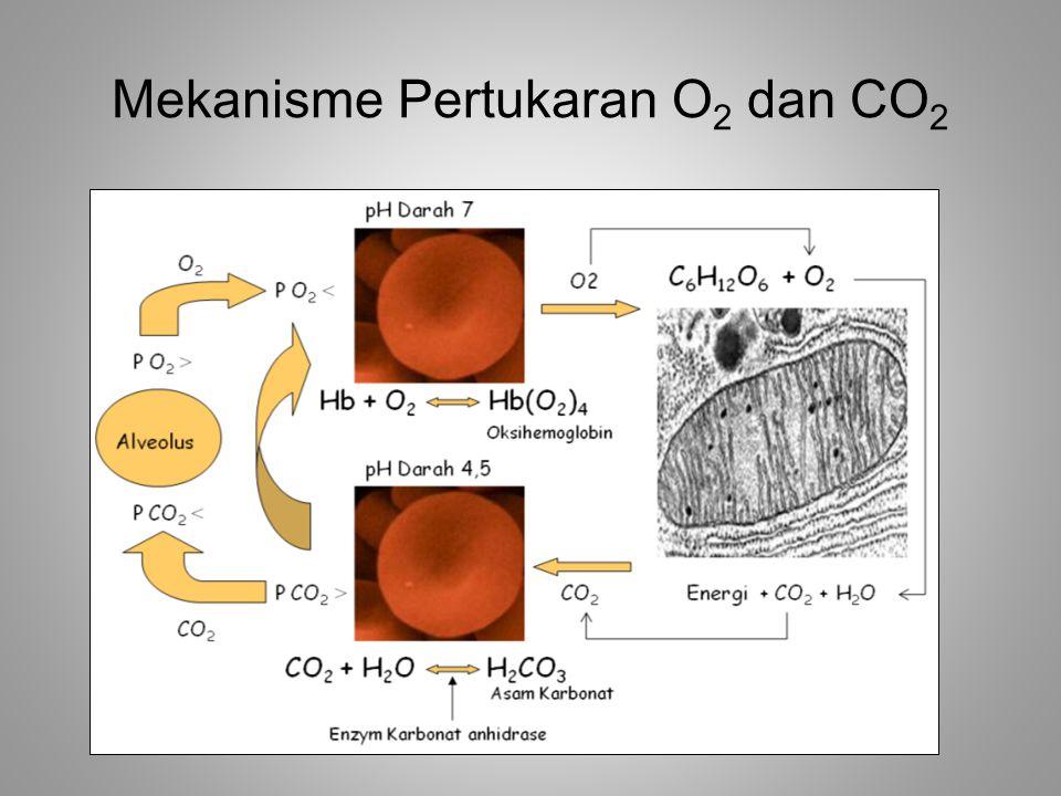 Mekanisme Pertukaran O 2 dan CO 2