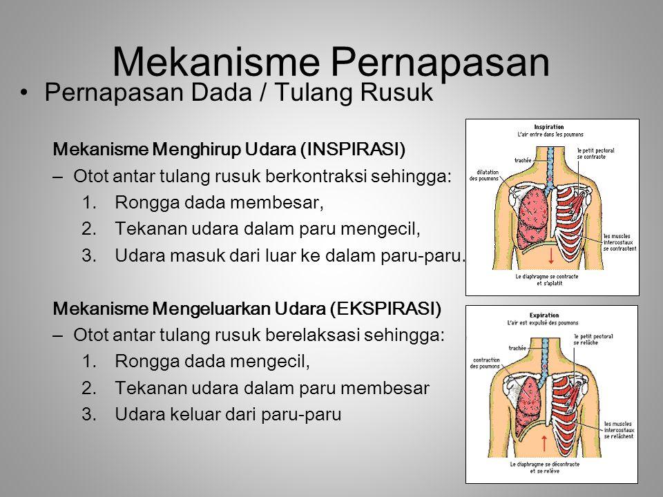 Mekanisme Pernapasan Pernapasan Dada / Tulang Rusuk Mekanisme Menghirup Udara (INSPIRASI) –Otot antar tulang rusuk berkontraksi sehingga: 1.Rongga dad