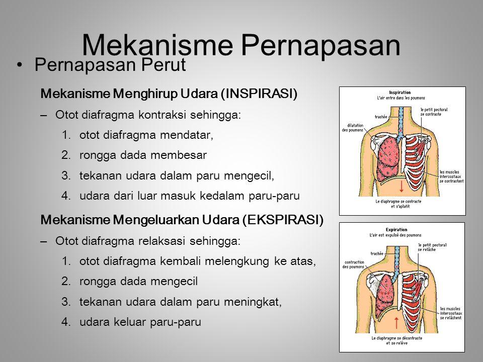 Mekanisme Pernapasan Pernapasan Perut Mekanisme Menghirup Udara (INSPIRASI) –Otot diafragma kontraksi sehingga: 1.otot diafragma mendatar, 2.rongga da