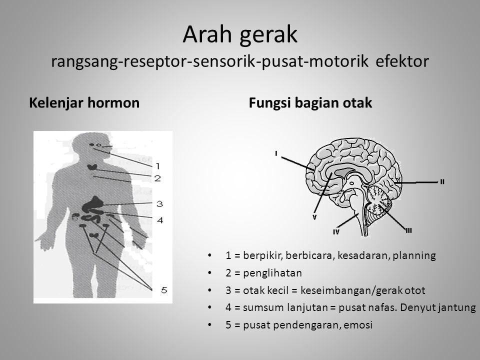 Arah gerak rangsang-reseptor-sensorik-pusat-motorik efektor Kelenjar hormon 1 = berpikir, berbicara, kesadaran, planning 2 = penglihatan 3 = otak keci