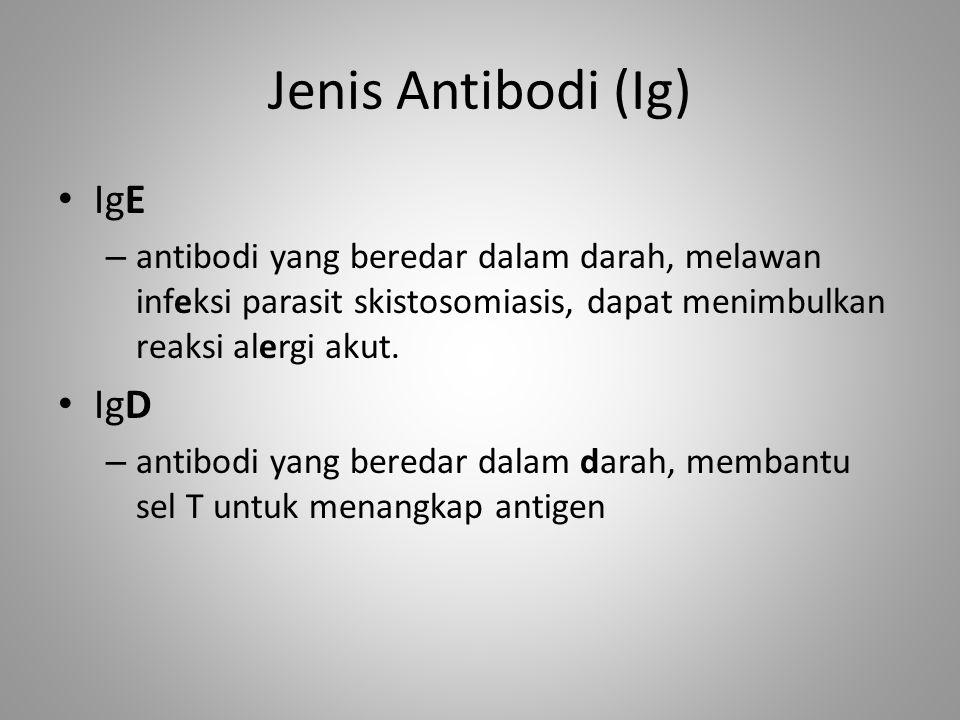 Jenis Antibodi (Ig) IgE – antibodi yang beredar dalam darah, melawan infeksi parasit skistosomiasis, dapat menimbulkan reaksi alergi akut. IgD – antib