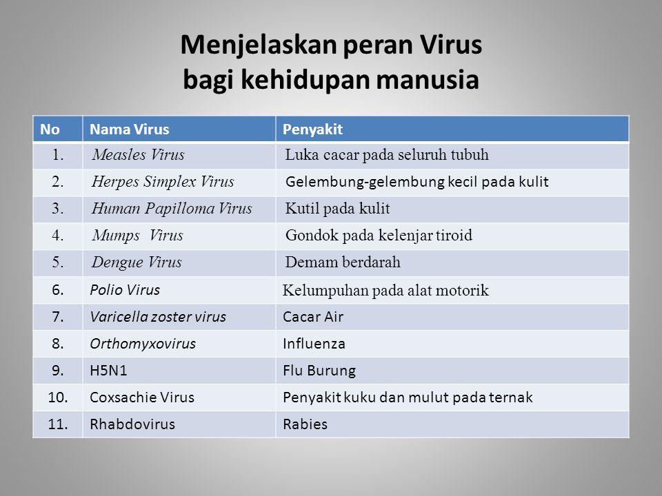 Menjelaskan peran Virus bagi kehidupan manusia NoNama VirusPenyakit 1.Measles VirusLuka cacar pada seluruh tubuh 2.Herpes Simplex Virus Gelembung-gele