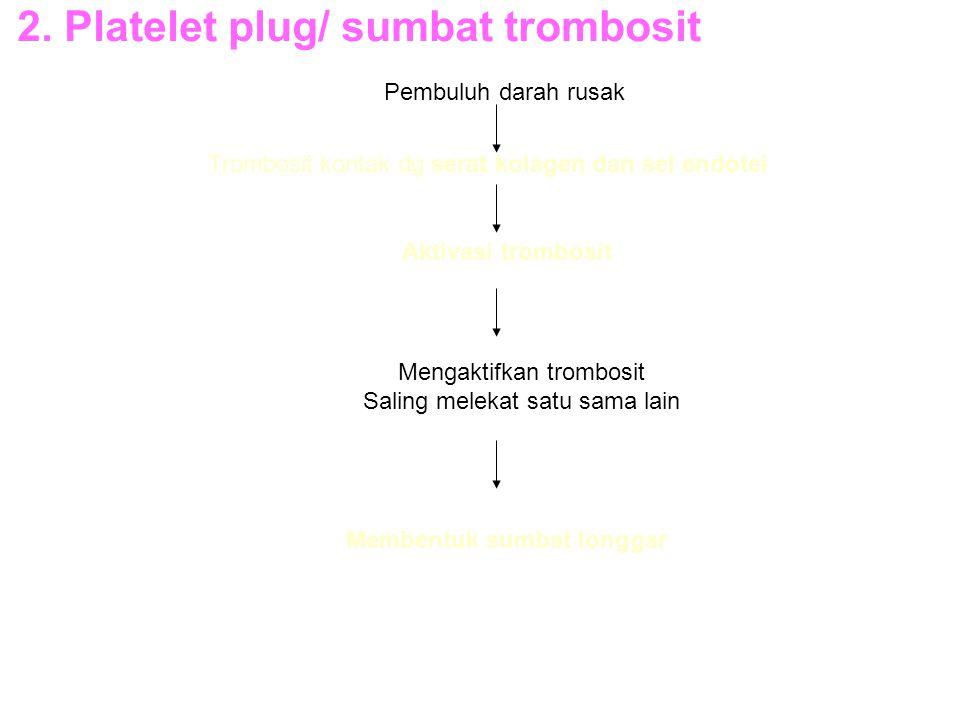 2. Platelet plug/ sumbat trombosit Pembuluh darah rusak Trombosit kontak dg serat kolagen dan sel endotel Aktivasi trombosit Mengaktifkan trombosit Sa
