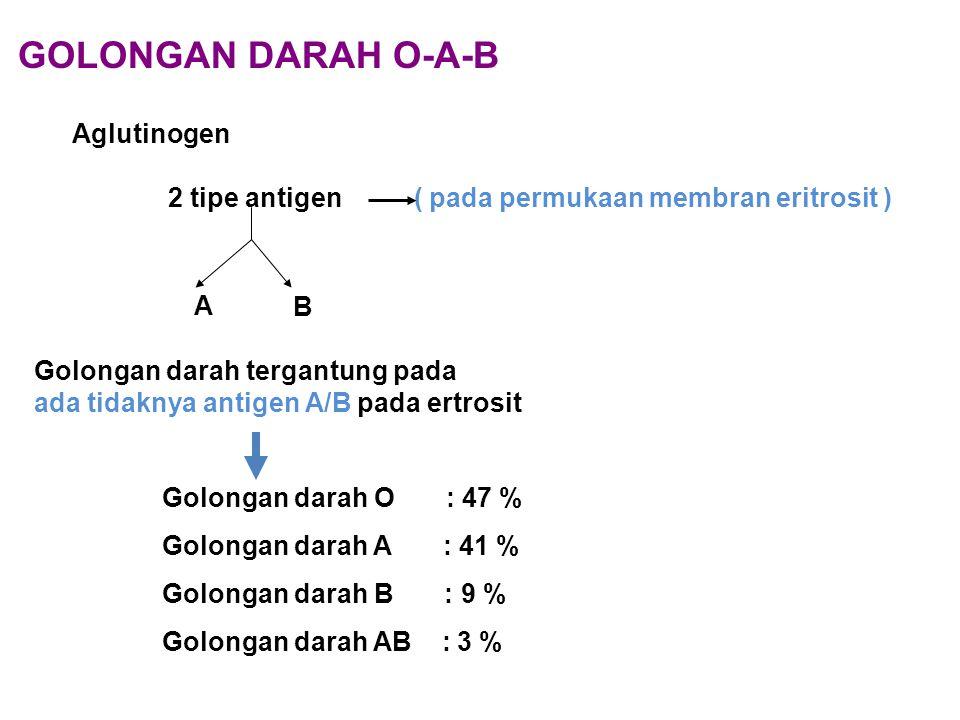 GOLONGAN DARAH O-A-B Aglutinogen 2 tipe antigen ( pada permukaan membran eritrosit ) A B Golongan darah tergantung pada ada tidaknya antigen A/B pada