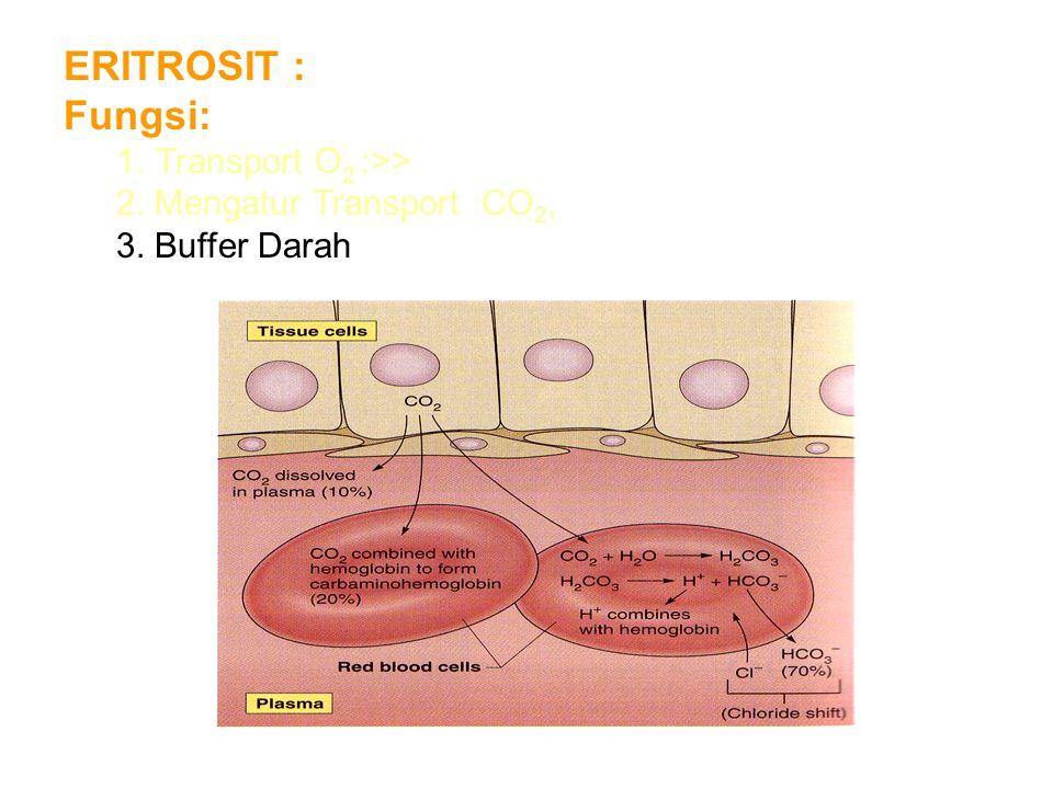 ERITROSIT : Fungsi: 1.Transport O 2 :>> 2. Mengatur Transport CO 2, 3. Buffer Darah