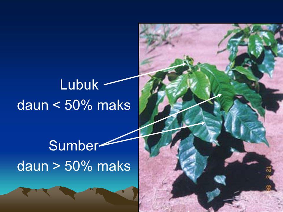 Lubuk daun < 50% maks Sumber daun > 50% maks