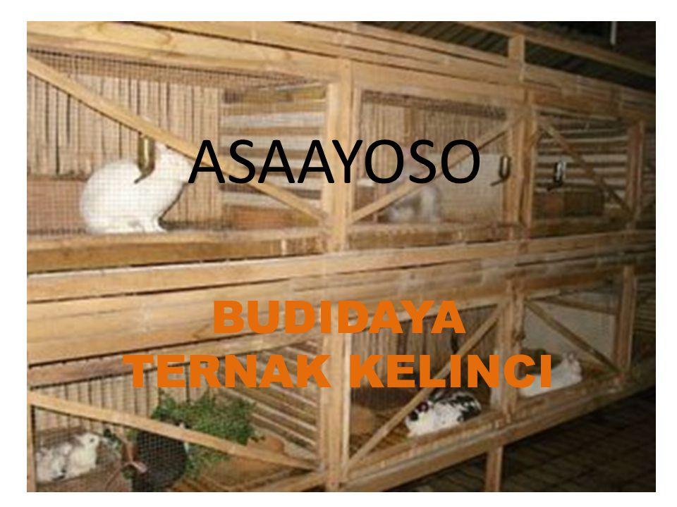ASAAYOSO BUDIDAYA TERNAK KELINCI