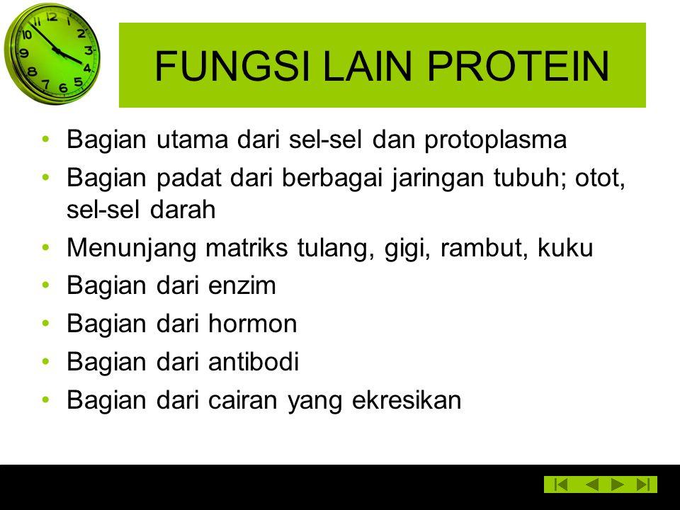 FUNGSI LAIN PROTEIN Bagian utama dari sel-sel dan protoplasma Bagian padat dari berbagai jaringan tubuh; otot, sel-sel darah Menunjang matriks tulang,