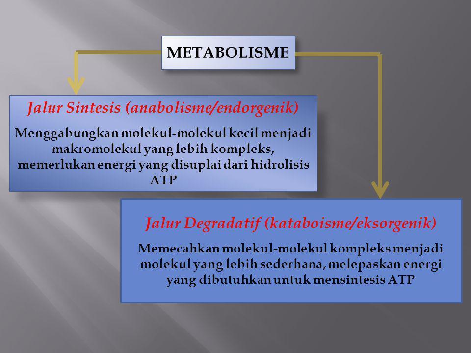 METABOLISME Jalur Sintesis (anabolisme/endorgenik) Menggabungkan molekul-molekul kecil menjadi makromolekul yang lebih kompleks, memerlukan energi yan