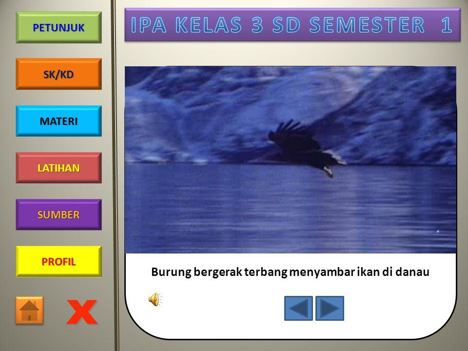 PROFIL SUMBER LATIHAN PETUNJUK SK/KD MATERI Ikan bergerak berenang di lautan