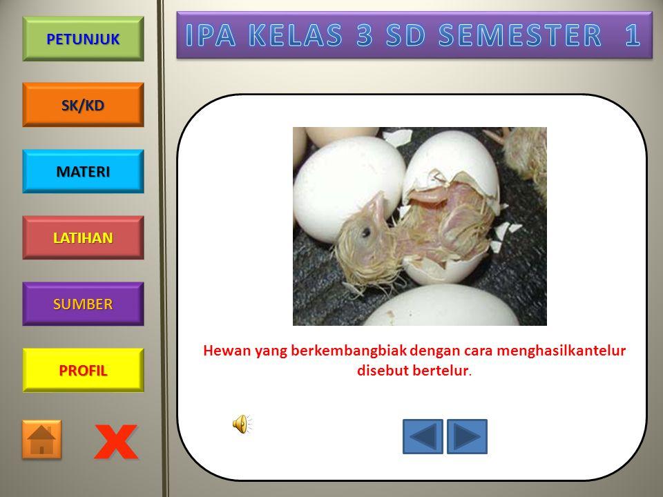 PROFIL SUMBER LATIHAN PETUNJUK SK/KD MATERI Telur menetas menjadi anak ayam
