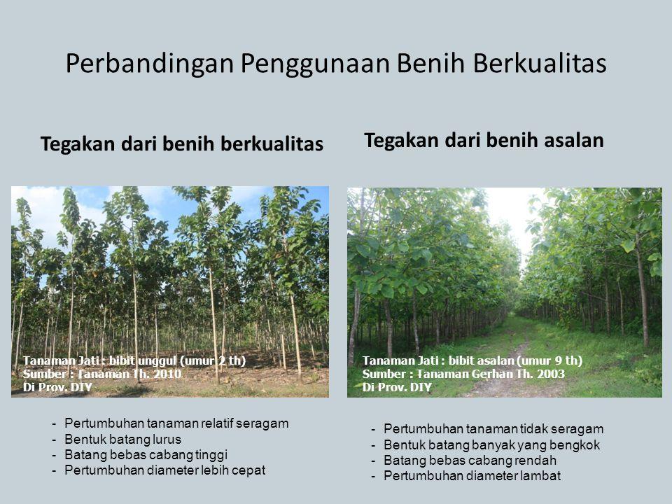 Perbandingan Penggunaan Benih Berkualitas Tegakan dari benih berkualitas Tegakan dari benih asalan Tanaman Jati : bibit unggul (umur 2 th) Sumber : Ta