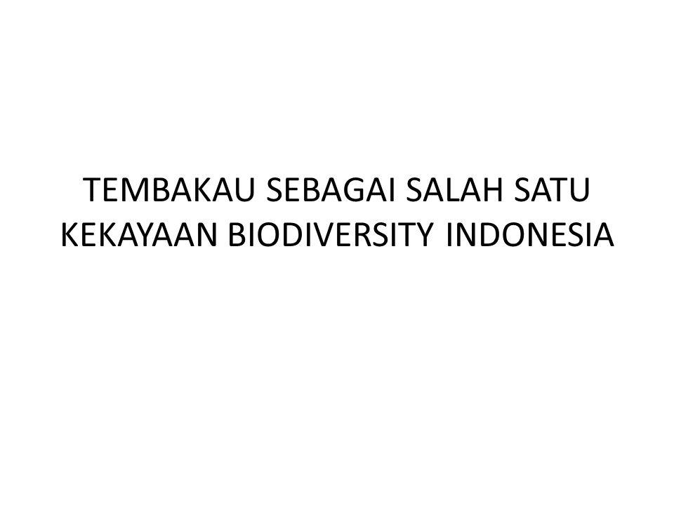 TEMBAKAU SEBAGAI SALAH SATU KEKAYAAN BIODIVERSITY INDONESIA