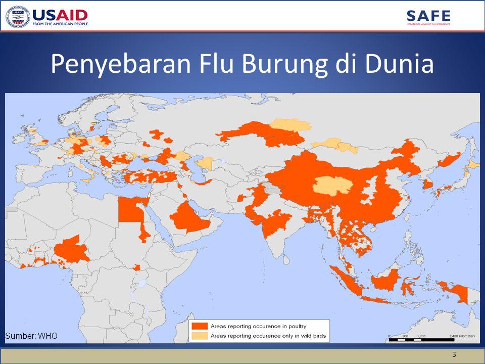Penyebaran Flu Burung di Dunia 3 Sumber: WHO