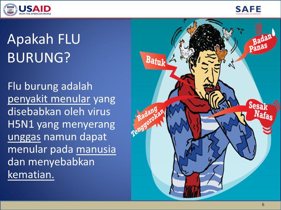 6 Apakah FLU BURUNG.