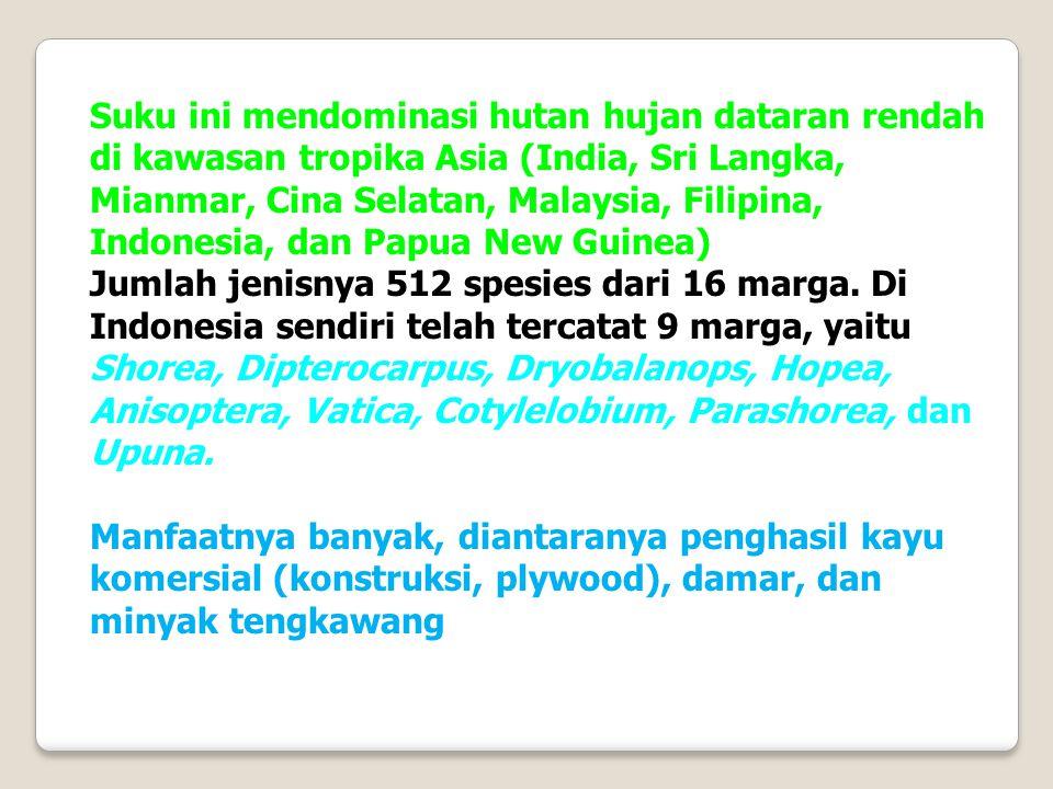 Suku ini mendominasi hutan hujan dataran rendah di kawasan tropika Asia (India, Sri Langka, Mianmar, Cina Selatan, Malaysia, Filipina, Indonesia, dan