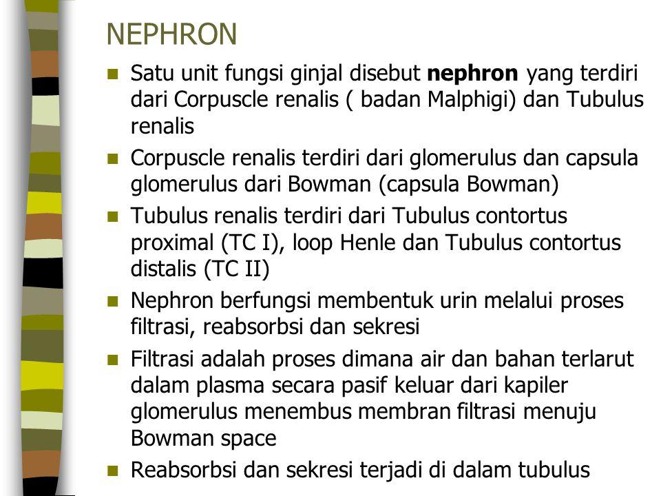 NEPHRON Satu unit fungsi ginjal disebut nephron yang terdiri dari Corpuscle renalis ( badan Malphigi) dan Tubulus renalis Corpuscle renalis terdiri da