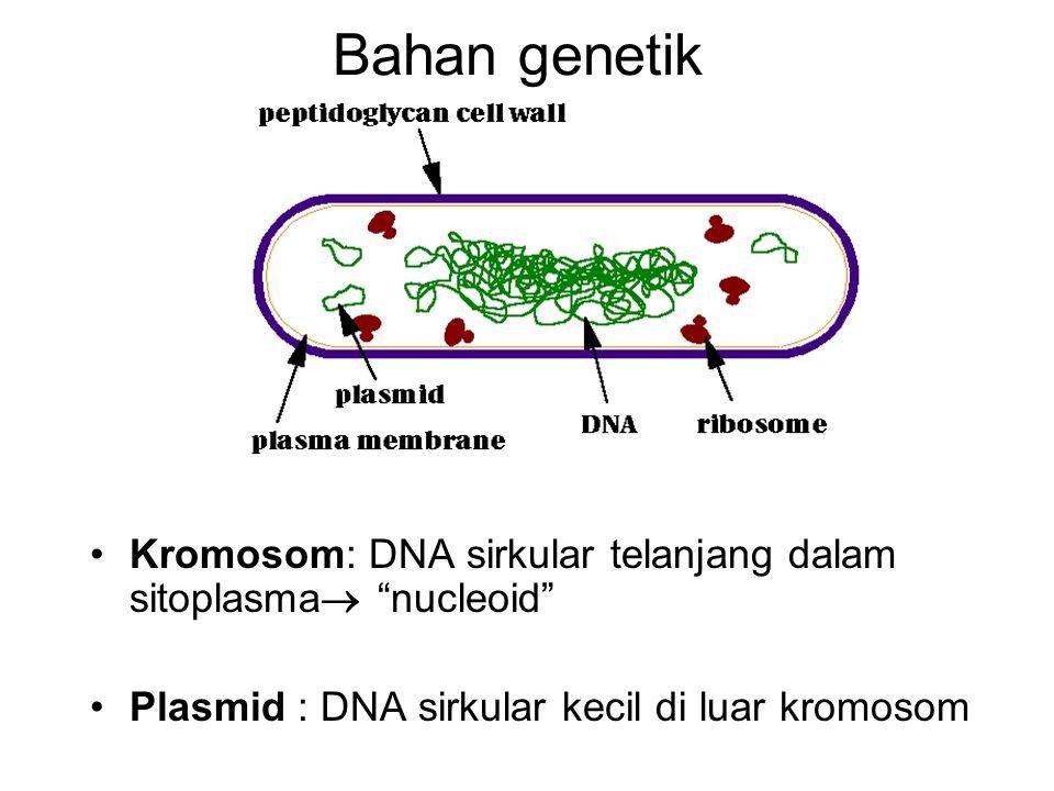 "Bahan genetik Kromosom: DNA sirkular telanjang dalam sitoplasma  ""nucleoid"" Plasmid : DNA sirkular kecil di luar kromosom"