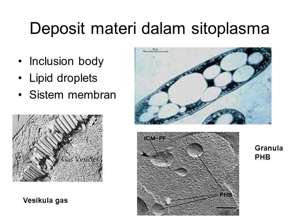 Deposit materi dalam sitoplasma Inclusion body Lipid droplets Sistem membran Granula PHB Vesikula gas