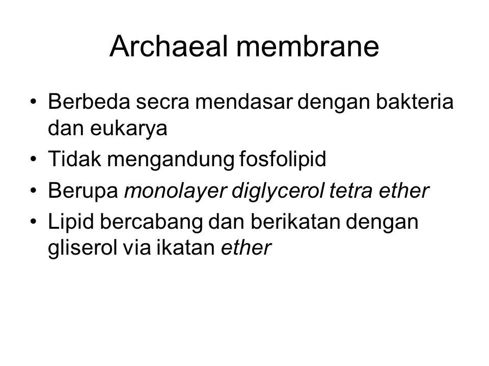 Archaeal membrane Berbeda secra mendasar dengan bakteria dan eukarya Tidak mengandung fosfolipid Berupa monolayer diglycerol tetra ether Lipid bercaba
