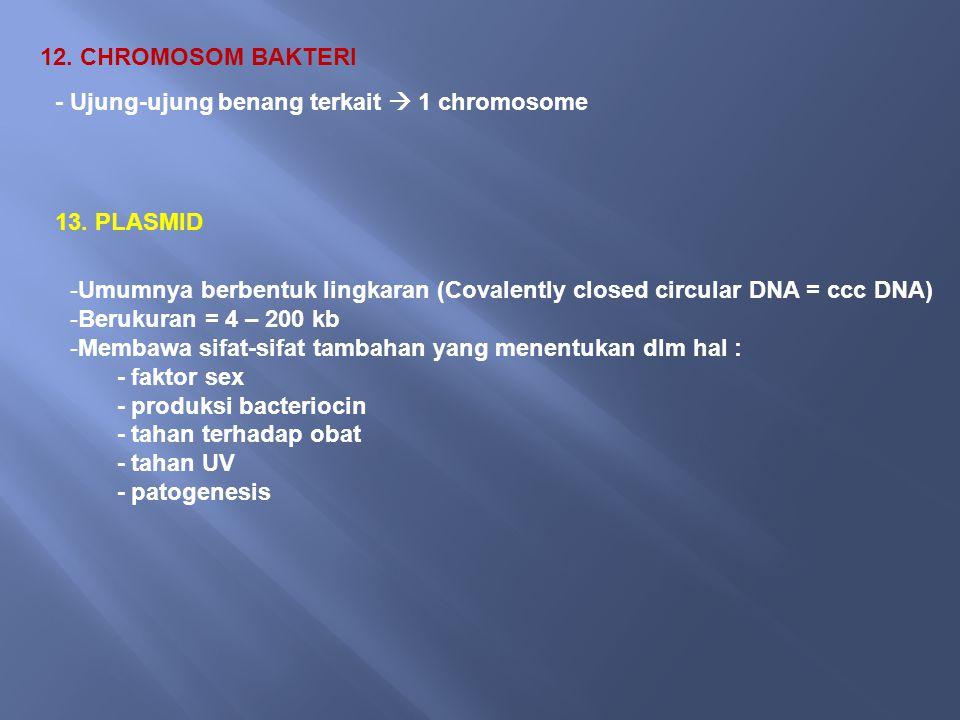 12.CHROMOSOM BAKTERI - Ujung-ujung benang terkait  1 chromosome 13.