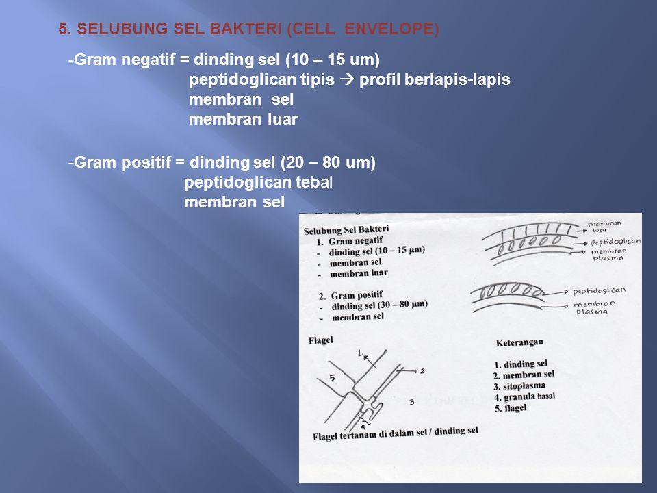 5. SELUBUNG SEL BAKTERI (CELL ENVELOPE) -Gram negatif = dinding sel (10 – 15 um) peptidoglican tipis  profil berlapis-lapis membran sel membran luar