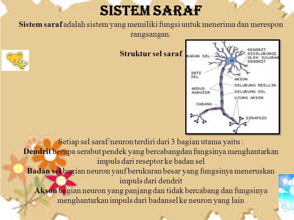 SISTEM SARAF Sistem saraf adalah sistem yang memiliki fungsi untuk menerima dan merespon rangsangan.