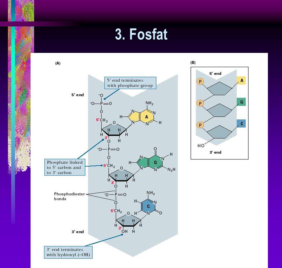3. Fosfat