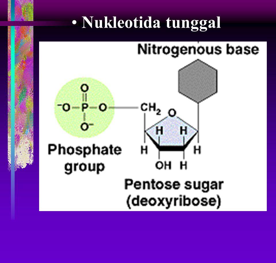 Nukleotida tunggal