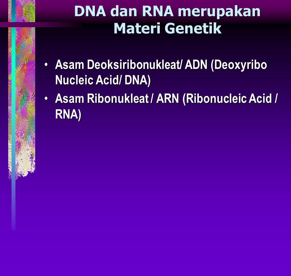 DNA dan RNA merupakan Materi Genetik Asam Deoksiribonukleat/ ADN (Deoxyribo Nucleic Acid/ DNA) Asam Deoksiribonukleat/ ADN (Deoxyribo Nucleic Acid/ DNA) Asam Ribonukleat / ARN (Ribonucleic Acid / RNA) Asam Ribonukleat / ARN (Ribonucleic Acid / RNA)