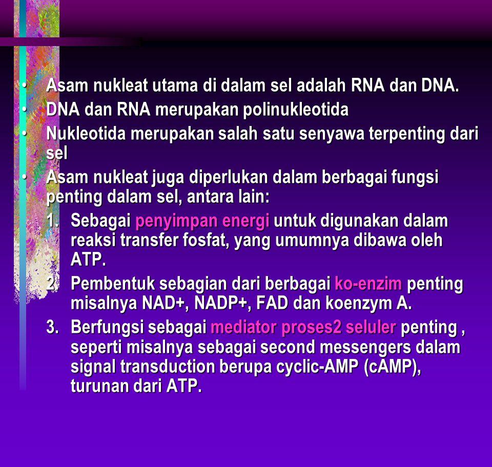 Asam nukleat utama di dalam sel adalah RNA dan DNA. Asam nukleat utama di dalam sel adalah RNA dan DNA. DNA dan RNA merupakan polinukleotida DNA dan R