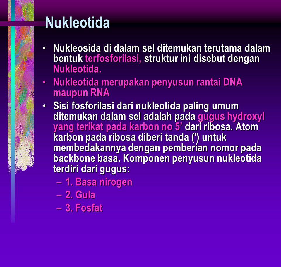Nukleotida Nukleosida di dalam sel ditemukan terutama dalam bentuk terfosforilasi, struktur ini disebut dengan Nukleotida. Nukleosida di dalam sel dit