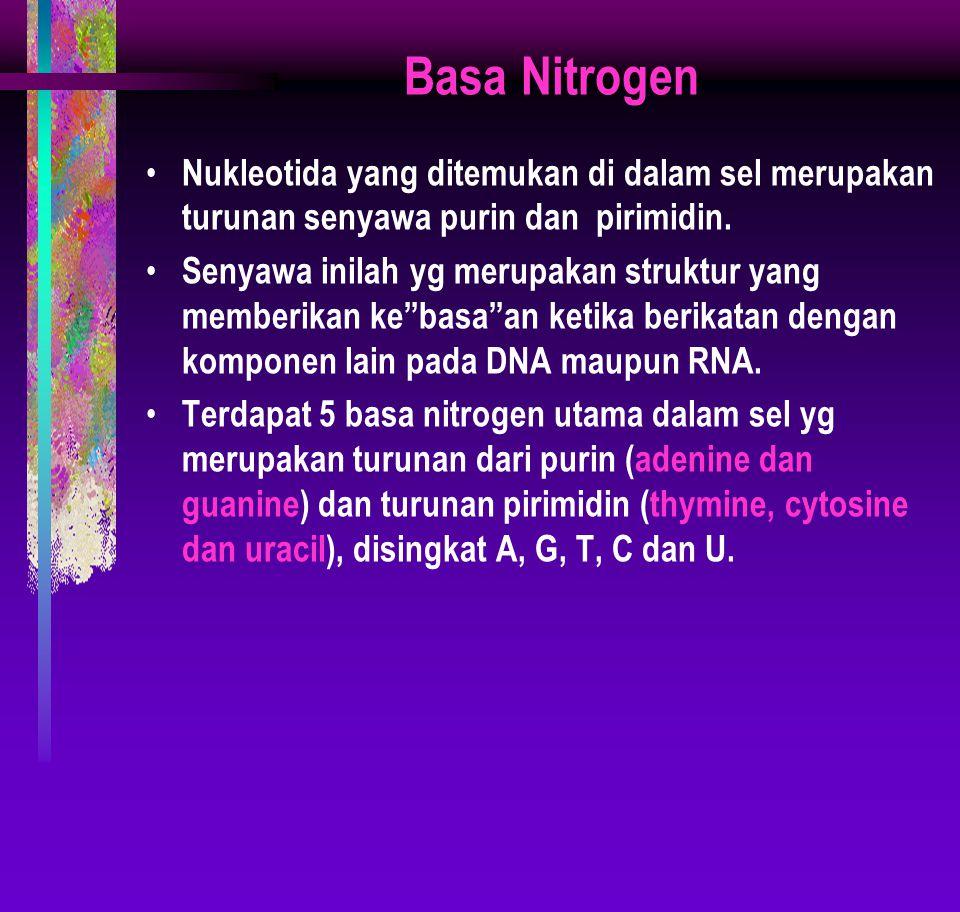 Basa Nitrogen Nukleotida yang ditemukan di dalam sel merupakan turunan senyawa purin dan pirimidin.