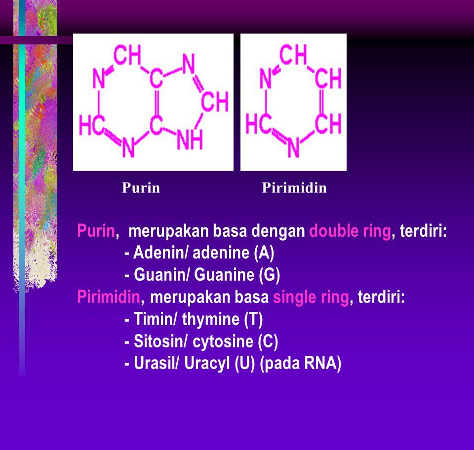 PurinPirimidin Purin, merupakan basa dengan double ring, terdiri: - Adenin/ adenine (A) - Guanin/ Guanine (G) Pirimidin, merupakan basa single ring, terdiri: - Timin/ thymine (T) - Sitosin/ cytosine (C) - Urasil/ Uracyl (U) (pada RNA)