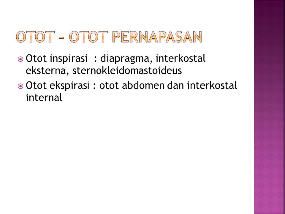  Otot inspirasi : diapragma, interkostal eksterna, sternokleidomastoideus  Otot ekspirasi : otot abdomen dan interkostal internal