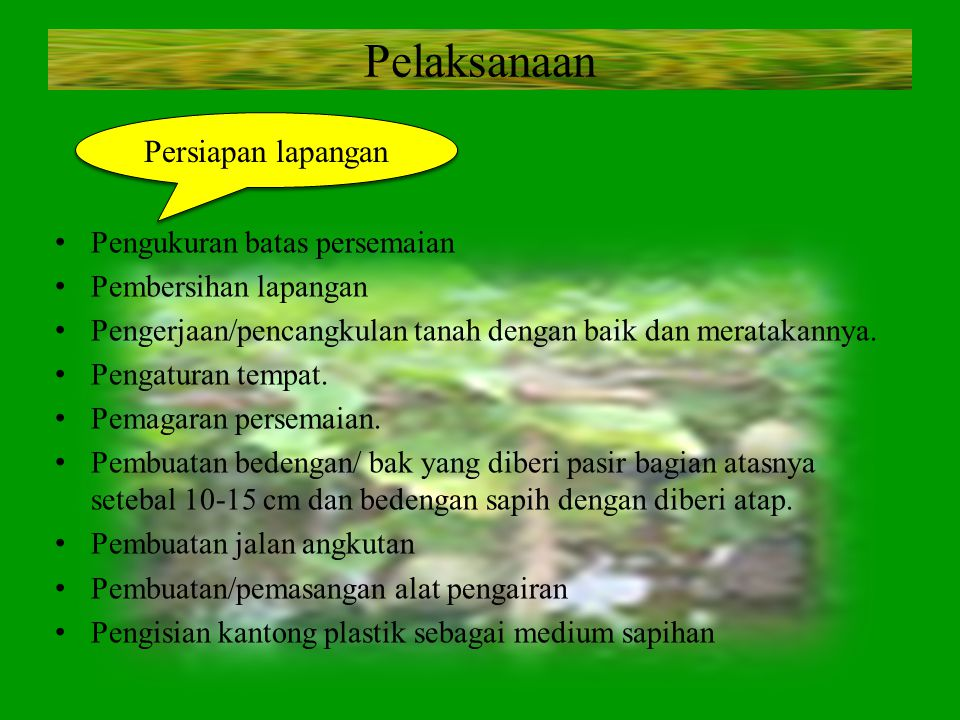 Pelaksanaan Pengukuran batas persemaian Pembersihan lapangan Pengerjaan/pencangkulan tanah dengan baik dan meratakannya. Pengaturan tempat. Pemagaran