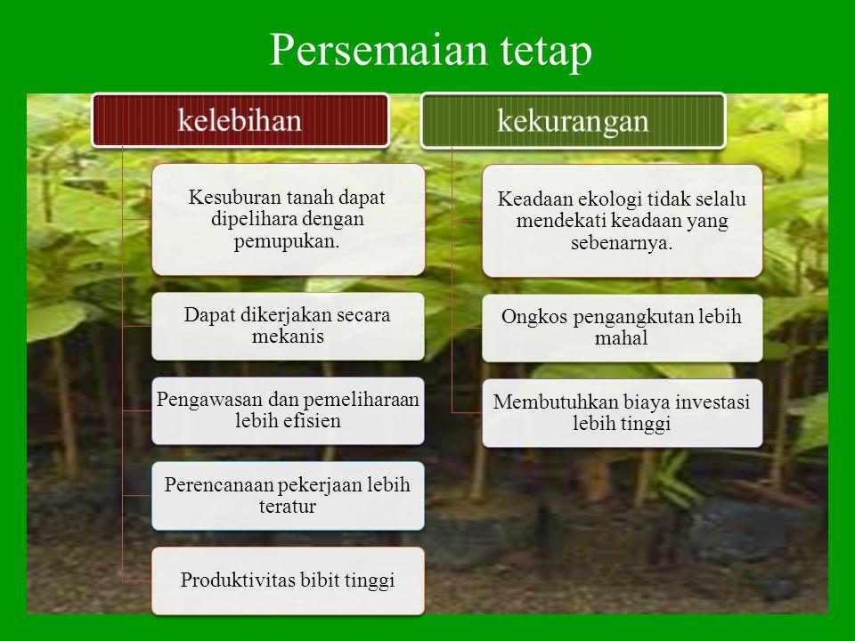 Persemaian tetap kelebihan Kesuburan tanah dapat dipelihara dengan pemupukan. Dapat dikerjakan secara mekanis Pengawasan dan pemeliharaan lebih efisie