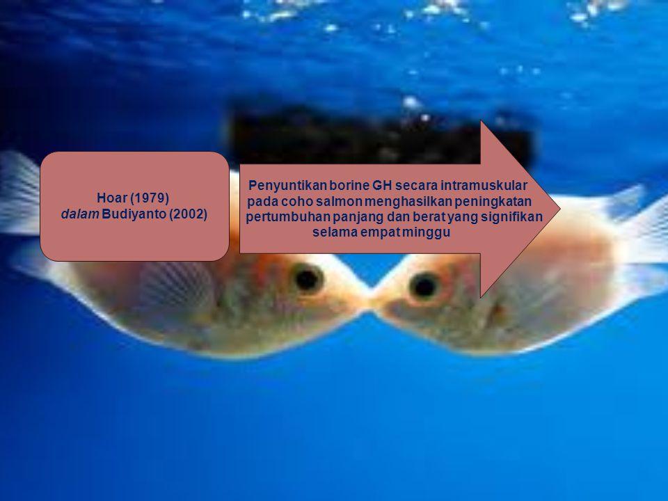 Hoar (1979) dalam Budiyanto (2002) Penyuntikan borine GH secara intramuskular pada coho salmon menghasilkan peningkatan pertumbuhan panjang dan berat
