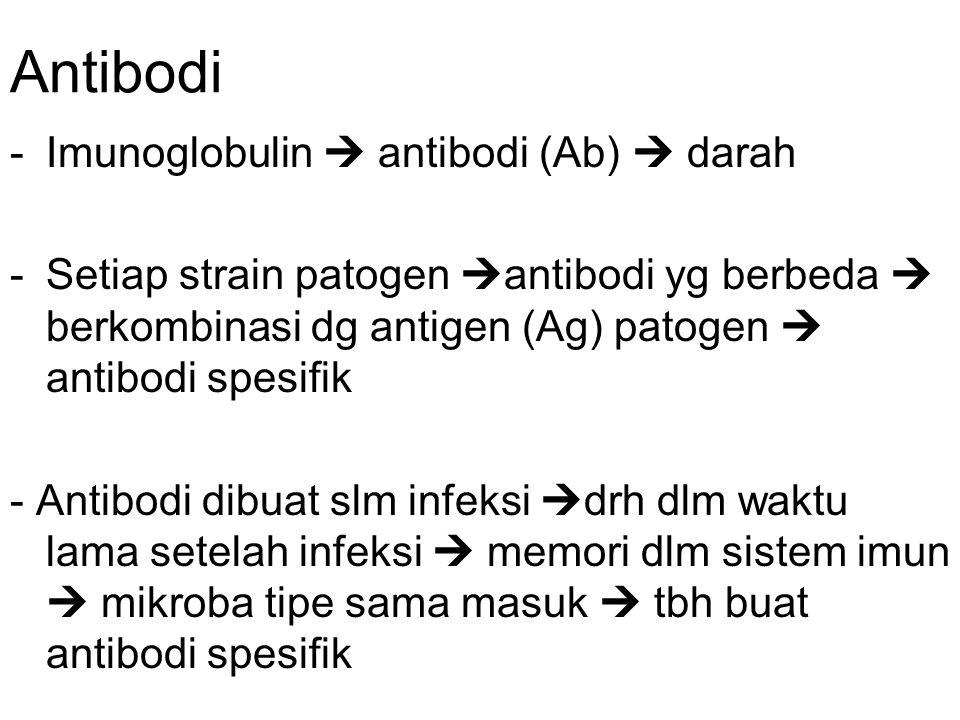 Antibodi -Imunoglobulin  antibodi (Ab)  darah -Setiap strain patogen  antibodi yg berbeda  berkombinasi dg antigen (Ag) patogen  antibodi spesifik - Antibodi dibuat slm infeksi  drh dlm waktu lama setelah infeksi  memori dlm sistem imun  mikroba tipe sama masuk  tbh buat antibodi spesifik