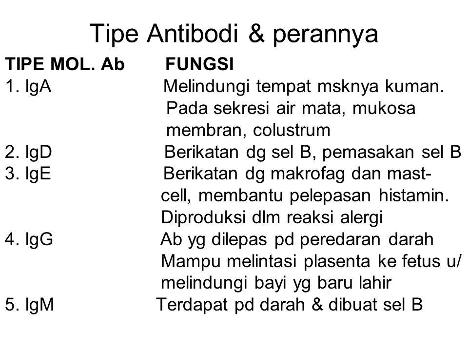 Tipe Antibodi & perannya TIPE MOL. Ab FUNGSI 1. IgA Melindungi tempat msknya kuman. Pada sekresi air mata, mukosa membran, colustrum 2. IgD Berikatan