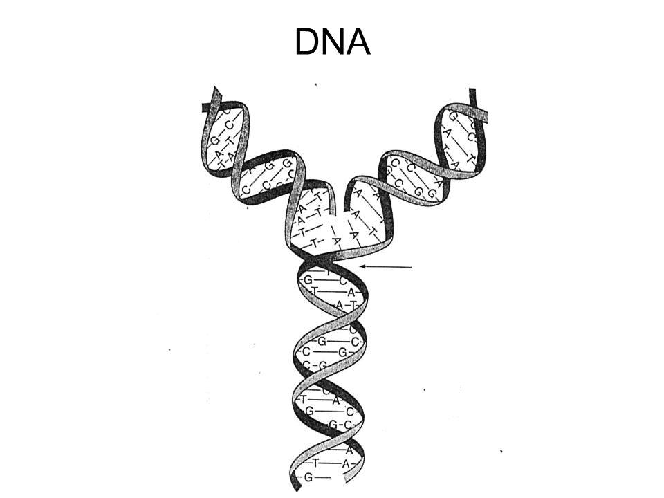 Tingkatan struktural - atom - organel - sel - jaringan - Organ - Sistem organ - Organisme → - populasi (kump org dr spesies yg sama) - Komunitas (kumpulan pop yg berbeda yg hdp di daerah yg sama) - Ekosistem (interaksi antara org & lingk → siklus nutrien & aliran energi)
