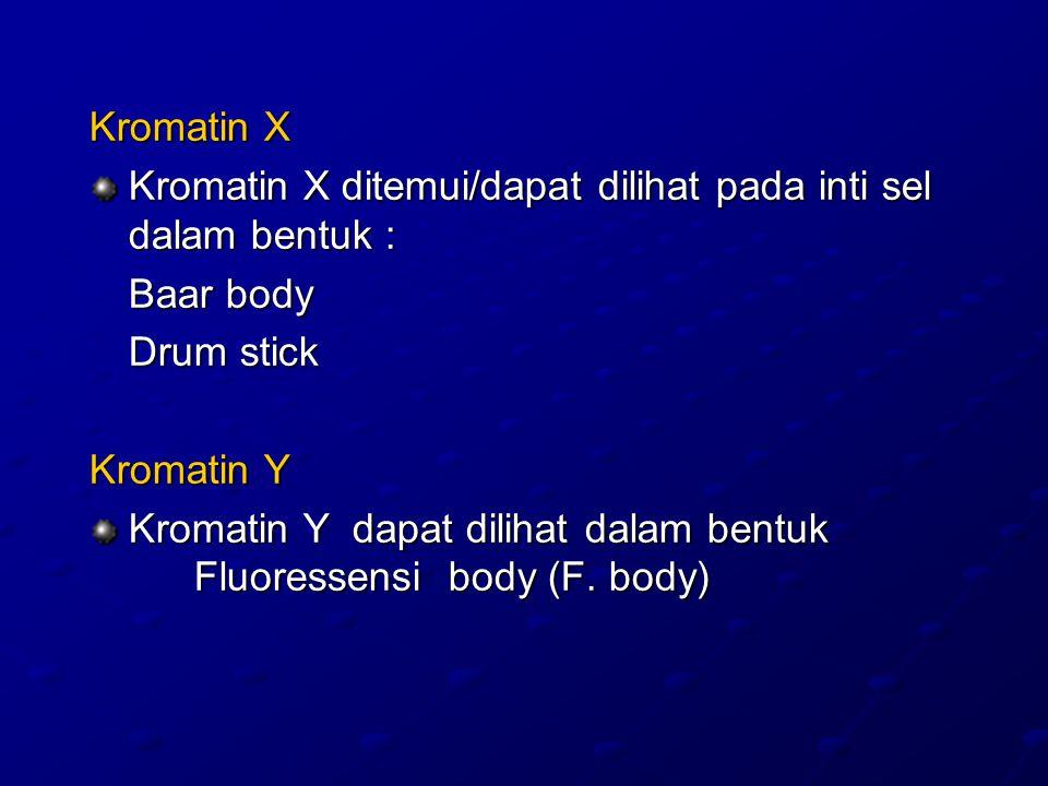 Kromatin X Kromatin X ditemui/dapat dilihat pada inti sel dalam bentuk : Baar body Drum stick Kromatin Y Kromatin Y dapat dilihat dalam bentuk Fluoressensi body (F.