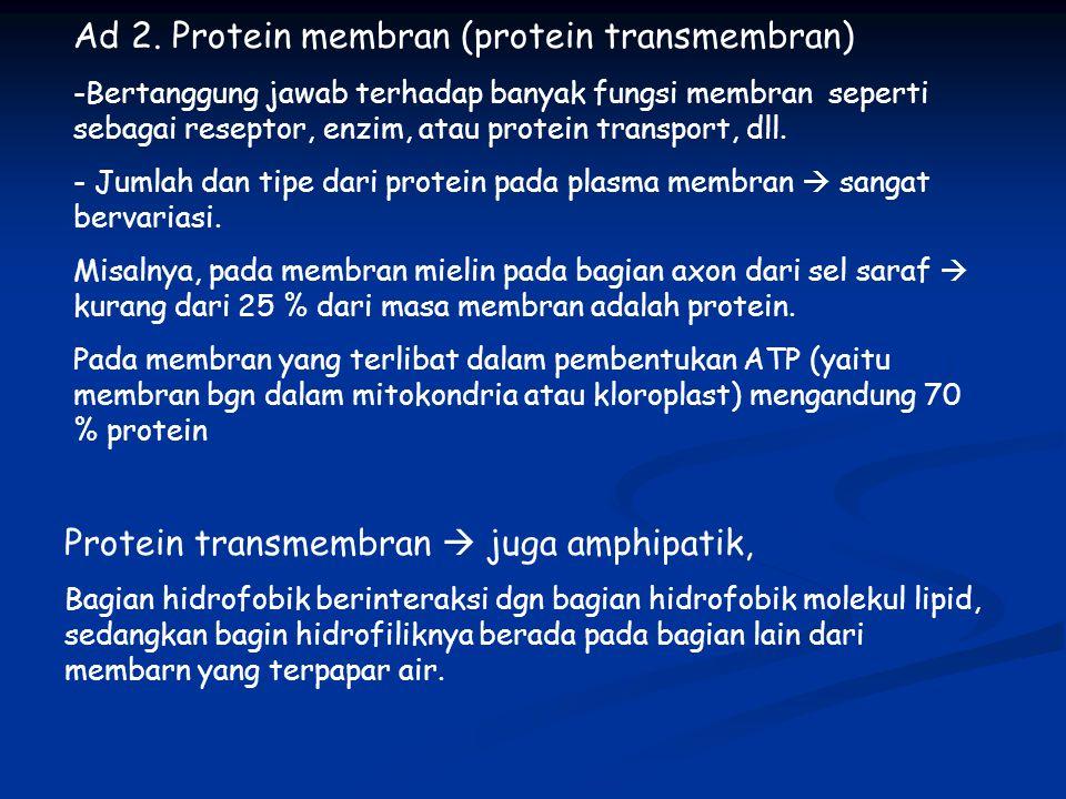 Ad 2. Protein membran (protein transmembran) -Bertanggung jawab terhadap banyak fungsi membran seperti sebagai reseptor, enzim, atau protein transport