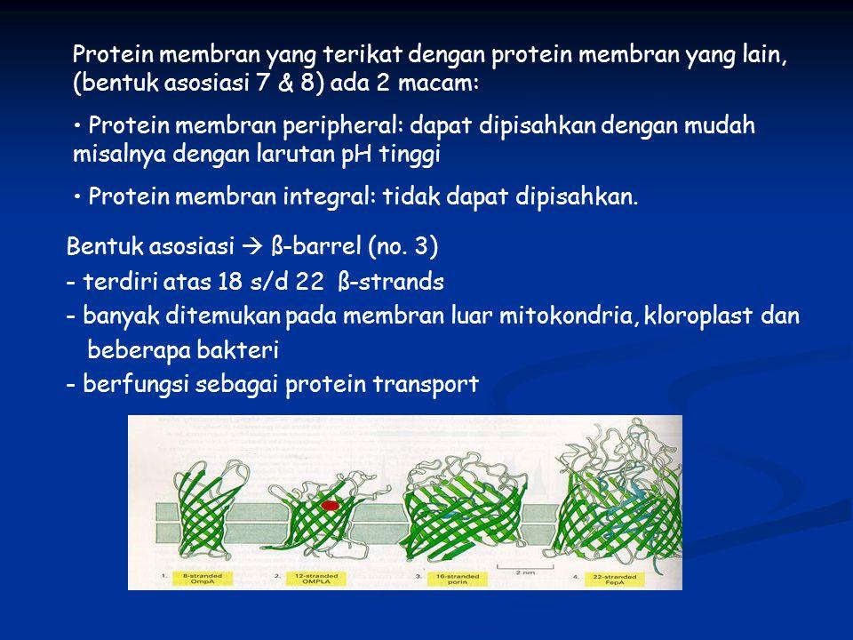 Protein membran yang terikat dengan protein membran yang lain, (bentuk asosiasi 7 & 8) ada 2 macam: Protein membran peripheral: dapat dipisahkan denga