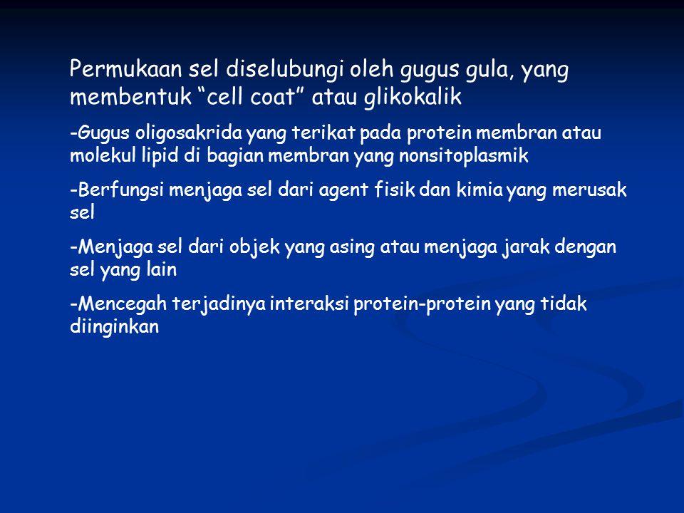"""Permukaan sel diselubungi oleh gugus gula, yang membentuk """"cell coat"""" atau glikokalik -Gugus oligosakrida yang terikat pada protein membran atau molek"""