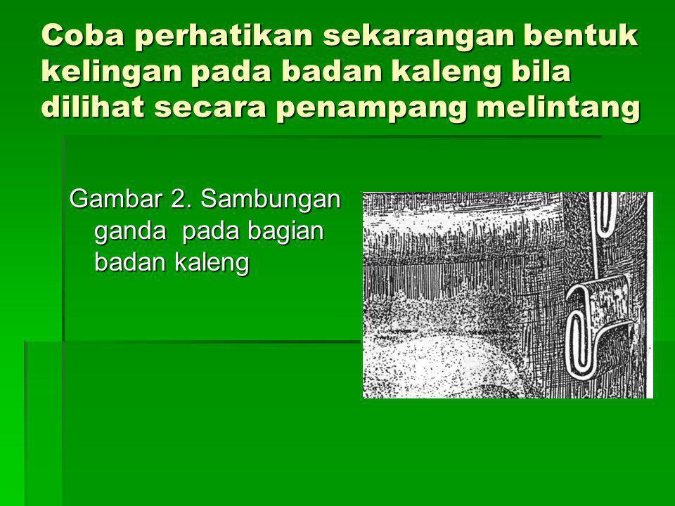 Coba perhatikan sekarangan bentuk kelingan pada badan kaleng bila dilihat secara penampang melintang Gambar 2. Sambungan ganda pada bagian badan kalen