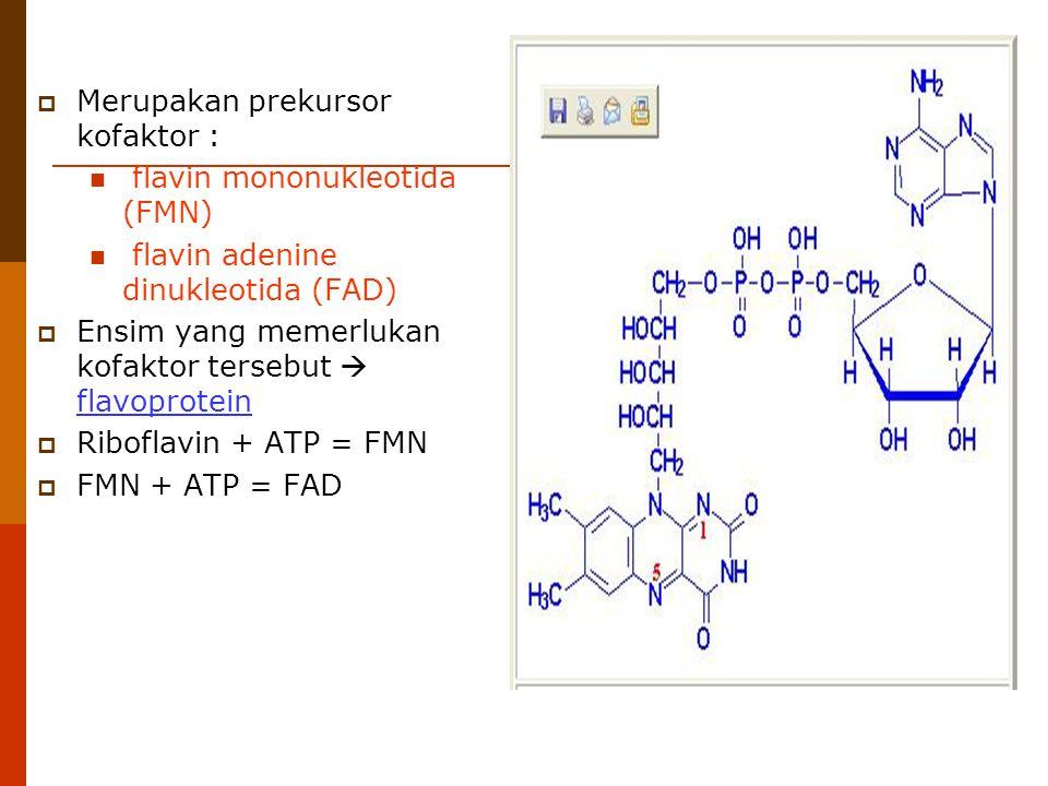  Merupakan prekursor kofaktor : flavin mononukleotida (FMN) flavin adenine dinukleotida (FAD)  Ensim yang memerlukan kofaktor tersebut  flavoprotei