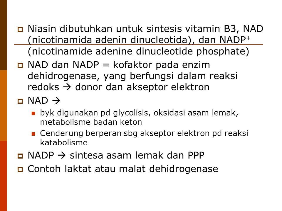  Niasin dibutuhkan untuk sintesis vitamin B3, NAD (nicotinamida adenin dinucleotida), dan NADP + (nicotinamide adenine dinucleotide phosphate)  NAD